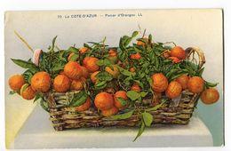 CPA FRUITS ( Panier D' Oranges )  Cote D' Azur - Flores, Plantas & Arboles