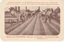 Carte Pub Vignes Américaines Léo Fournier Castillon Sur Dordogne Gironde (2 Scans) - Agriculture