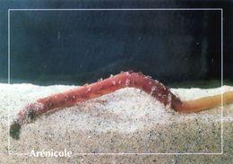 CPSm    Arènicole  (1996-pierron) - Insectos