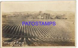 137004 US PUERTO RICO PINEAPPLE FIELD POSTAL POSTCARD - Cartes Postales