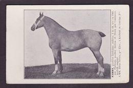 CPA Hippisme Cheval Horse Bretagne Non Circulé Finistère Kerbrat En Guiclan - Hípica