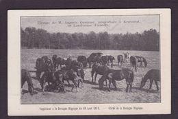 CPA Hippisme Cheval Horse Bretagne Non Circulé Finistère Kerzourat Landivisiau - Hípica