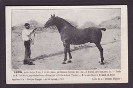 CPA Hippisme Cheval Horse Bretagne Non Circulé Finistère Kérourgan Saint Pol De Léon Brésil - Hípica