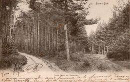 SAINT DIE ( 88 ) - Sous-Bois Au Paradis - Saint Die