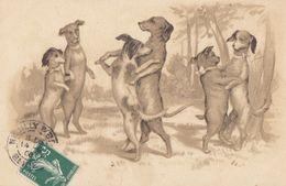 CPA (chiens ) Teckel (boite2) - Cani