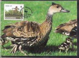 Bahamas - 1988 - Carte Maximun - WWF - Whistling Duck - Cygnus - Ducks