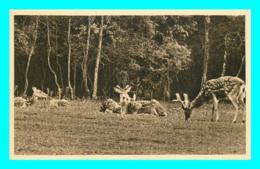 A853 / 011 76 - CLERES Parc Zoologique Cerfs Pseudaxis - Zoo - Clères