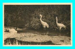 A853 / 009 76 - CLERES Parc Zoologique Cygne à Col Noir - Zoo - Clères