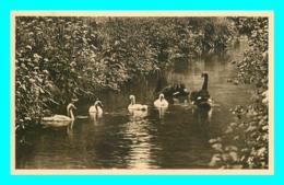A853 / 005 76 - CLERES Parc Zoologique Cygnes Noirs - Zoo - Clères