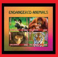 094. GAMBIA 2014 STAMP M/S ENDANGERED ANIMALS, TIGER, MONKEYS. MNH - Gambie (1965-...)