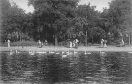 Hamburg Alsterpartie Lake Swan Birds Promenade - Sonstige