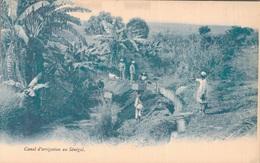 SENEGAL / CANAL D'IRRIGATION - Senegal