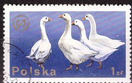PIA - POLOGNE - 1975 : 26° Congresso Della Federazione Zootecnica Europea A Varsavia - Oche - (Yv  2218) - 1944-.... Republik