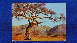 Transvaal South Africa - Südafrika