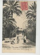 AFRIQUE - ALGERIE - BISKRA - Jardin Landon, Allée Des Palmiers - Biskra