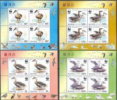 M2558 ✅ Fauna Animals WWF Birds Ducks Geese 2004 North Korea 4 Sheets Set MNH ** 21ME - Ducks