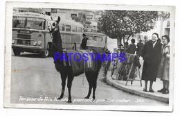 137054 ARGENTINA SANTIAGO DEL ESTERO TERMAS DE RIO HONDO LLAMA PASEANDO POR LAS CALLES PHOTO NO POSTAL POSTCARD - Messico