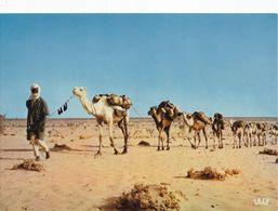 NIGER CARAVANE SUR LA ROUTE D'IN GALL (dil462) - Niger
