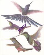 Série N ° 47 :  Oiseaux Colibris  14 Chromos Chocolat Cote D'Or  Format (18 X 14,5)  ( Plusieurs Thèmes à Venir ) - Côte D'Or