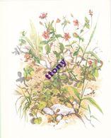 Série N ° 25 :  Fleurs Sur Ton Chemin  15 Chromos Chocolat Cote D'Or  Format (18 X 14,5)  ( Plusieurs Thèmes à Venir ) - Côte D'Or