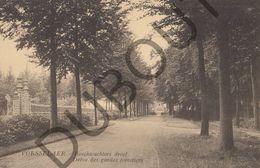 Postkaart - Carte Postale - Vorselaar - Boschwachters Dreef  (B536) - Vorselaar