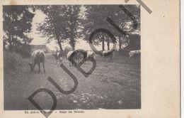 Postkaart - Carte Postale - Sint Job In T Goor - Naar De Weide (B522) - Brecht