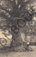 Postkaart - Carte Postale - Zoersel - De Lindenboom  (B620) - Zoersel