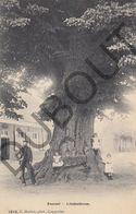 Postkaart - Carte Postale - Zoersel - De Lindenboom  (B615) - Zoersel