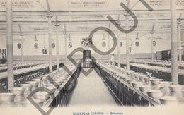 Postkaart - Carte Postale - Merksplas - Colonie - Réfectoire (B521) - Merksplas