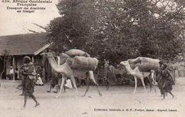 Vue - Senegal