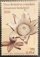 Montenegro, 2020, Flowers - Berkeley's Earthstar (MNH) - Montenegro