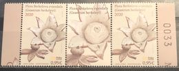 Montenegro, 2020, Flowers - Berkeley's Earthstar , Pair With Label (MNH) - Montenegro
