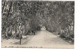 Alger - Allée De Bambous Au Jardin D'Essai - Alger