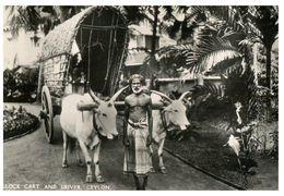 (C 3) Very Old - Ceylon / Sri Lanka - Bullock Cart - Equipos