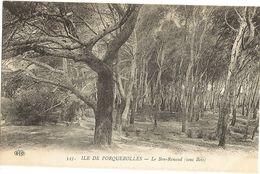 83 -  Ile De PORQUEROLLES -  Le Bon Renaud Sous Bois  243 - Porquerolles