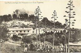 83 -  PORQUEROLLES -   La Flore Exotique De Porquerolles ( Les Agaves )    251 - Porquerolles