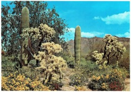 Spring In The Desert, Arizona, US - Unused - Non Classés
