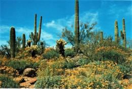Springtime In The Desert, Arizona, US - Unused - Non Classés