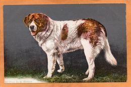 Switzerland 1906 Postcard - Suisse