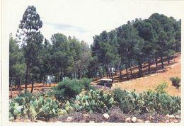 Carte Postale. Maroc. Souvenir Du Forestier. Photo De Forêt. Arbres. Cactus. - Árboles