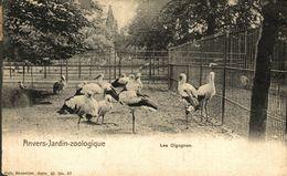 ANVERS-JARDIN ZOOLOGIQUE LES CIGOGNES.  ANTWERPEN // ANVERS. Bélgica Belgique - Belgique