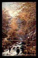 RAPHAEL TUCK - IVYBRIDGE - Tuck, Raphael