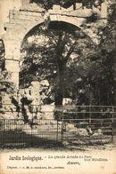 Jardin Zoologique - Mouflons.  ANTWERPEN // ANVERS. Bélgica Belgique - Belgique