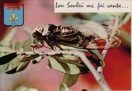 CIGALE - Insectos