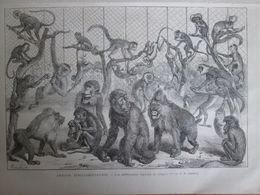 Gravure  1873  Jardin D Acclimation   LES DIFFERENTES ESPECES DE SINGES - Estampes & Gravures