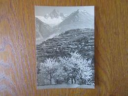 Arbre En Fleurs    Montagne  Kunstverlag    Benedikt Rast      Photographe - Illustrateurs & Photographes