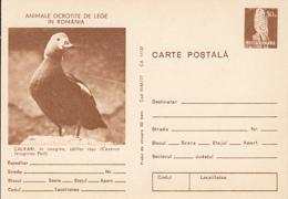 BIRDS, DUCKS, RUDDY SHELDUCK, PC STATIONERY, ENTIER POSTAL, 1977, ROMANIA - Ducks