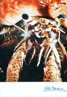 Photo  Albert Monier   Image De La Nature  Bernard L'hermite Et Son Commensal La Ficuline - Monier