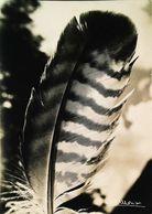 Photo  Albert Monier  Plume  Parure Des Princes Du Ciel 1965 - Monier