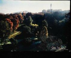 Photo  Albert Monier  Paris Parc De Buttes Chaumont - Monier